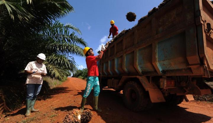 GAPKI: Ekspor Sawit dalam Bentuk CPO Sudah Sangat Kecil