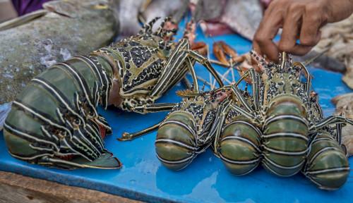 Rencana Lombok Jadi Pusat Budi Daya Lobster Terus Dimatangkan