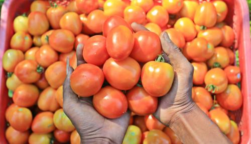 Jambu Biji, Cabai, dan Tomat Picu Penyakit Batu Empedu, Dokter: Salah Besar