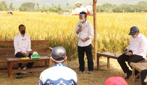 Tinjau Panen Raya Padi di Kabupaten Malang, Jokowi: Kita Tidak Perlu Impor