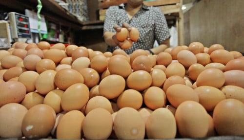Viral Telur dalam Telur, Bisakah? Ini Kata Pakar IPB University
