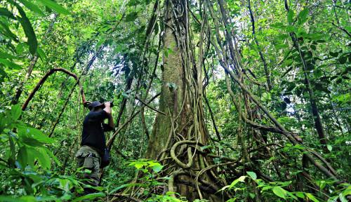 KLHK: Deforestasi Indonesia 2019–2020 Terendah Sepanjang Sejarah