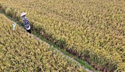 Juni, Nilai Tukar Petani Menguat 0,19%