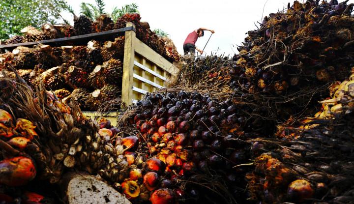 Dikenal Kaya Akan Komoditas Alam, Kini Saatnya Sawit Indonesia Manggung di Dunia Internasional