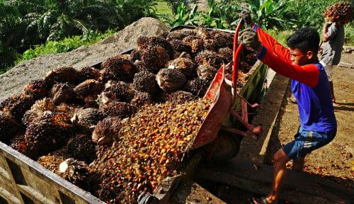 Cargill Bangun Kilang Minyak Kelapa Sawit Baru US$200 Juta di Lampung