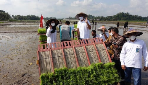 Perluas Program Agro Solution, Pupuk Indonesia Lakukan Tanam Perdana di Banyuwangi