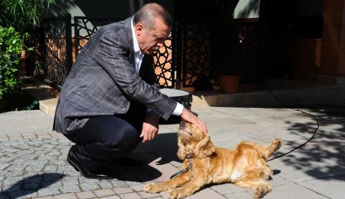 Sebut Pelihara Anjing Kurangi Pahala, Ustad Somad, Udah Liat Foto Erdogan Ngelus-Ngelus Anjing?