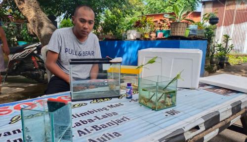 Banjir Peminat Ikan Hias, KKP Gelar Pelatihan Budi Daya Ikan Cupang