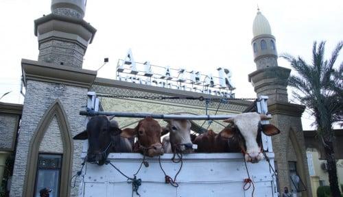 Al Azhar Memorial Garden Kurban 10 Sapi Dan 144 Domba