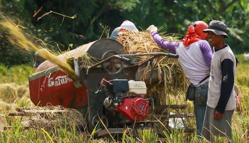 Kredit Pertanian BRI Tembus Rp117,54 Triliun, Pembiayaan Rice Mill Jangkau Lebih 40 Ribu Nasabah
