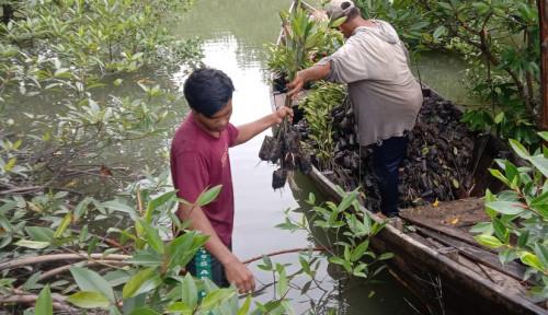 Penanaman Bibit Mangrove Kerek Ekonomi Masyarakat dan Selamatkan Biota Laut