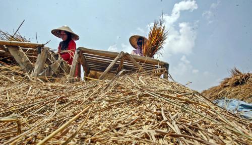 Indef Nilai Pandemi Picu Ruralisasi, Pertanian Jadi Bantalan saat Resesi