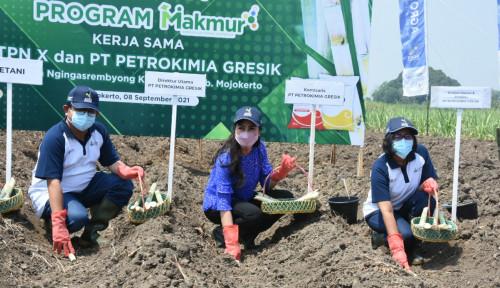 Dukung Swasembada Gula 2024 Petrokimia Gresik dan PTPN X Kawal Petani Tebu Melalui Program Makmur