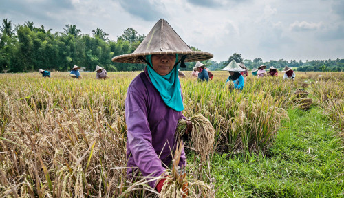 Miris, Indonesia Krisis Petani Muda