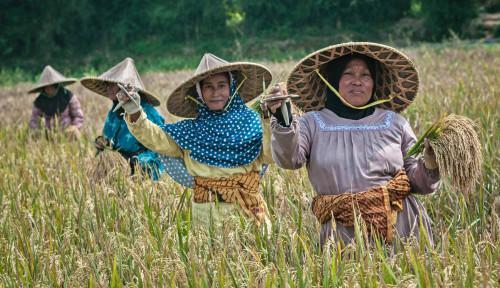 BPS Sebut 3 Subsektor Dorong Peningkatan Nilai Tukar Petani Nasional