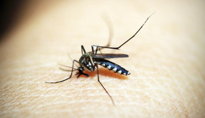 Waspada! Peneliti Mendeteksi Malaria yang Kebal Terhadap Obat Utama