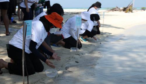 Karyawan Teleperformance Lepasliarkan Puluhan Tukik ke Laut