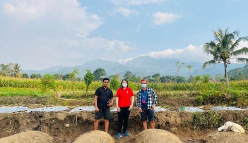 Selebgram David Arrie Cantona Perluas Lahan Perkebunan Bersama Alumni Mahasiswa Udinus