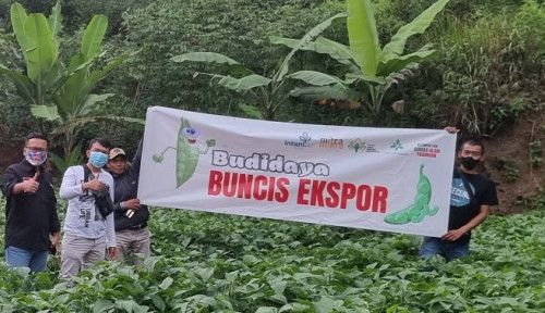 Intani Dukung Petani Buncis Ekspor di Ciwidey dan Lembang