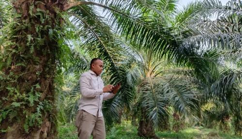 BASF Luncurkan Solusi Digital BASF Sahabat Planters